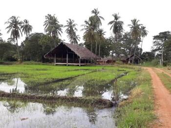 Slika: Kamatha Resort ‒ Polonnaruwa