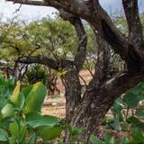 傳統套房 - 花園景觀