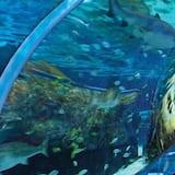 Leilighet, flere senger (Whispering Pines 233) - Svømmebasseng