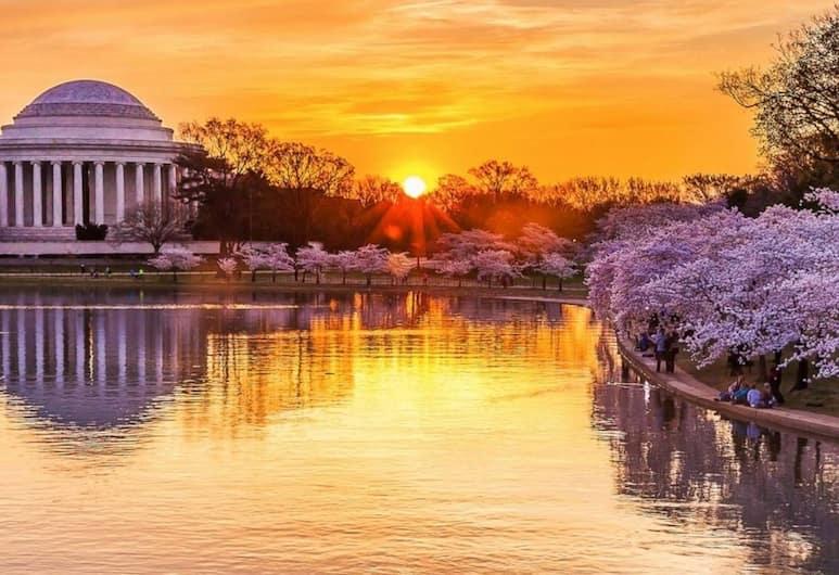 Stunning DC Home w/ Rooftop Pool - Ideal Location!, Washington, Bassein