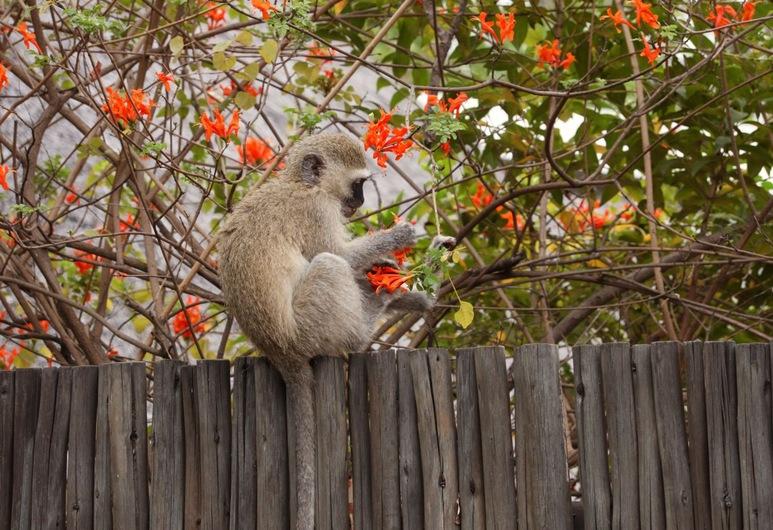 크루거 파크 투어스, Kruger National Park, 숙박 시설 부지