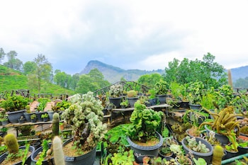 Picture of Ella Flower Garden Resort in Ella