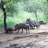 Παρατήρηση άγριων ζώων