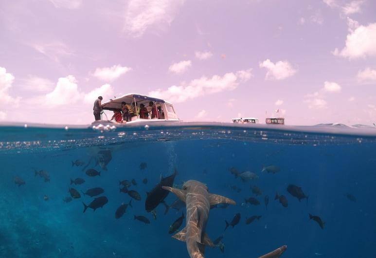 威諾爾瓦綠飯店, Maafushi, 運動設施
