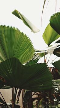 坎古里姆班坎古飯店的相片