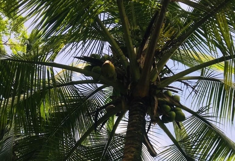All Rankins Eco-Lodge, Tortuguero, Jardim