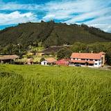 Premium Suite - Mountain View
