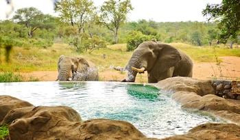 Foto Motswari Private Game Reserve di Taman Nasional Kruger