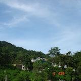 Standard Single Room - Mountain View