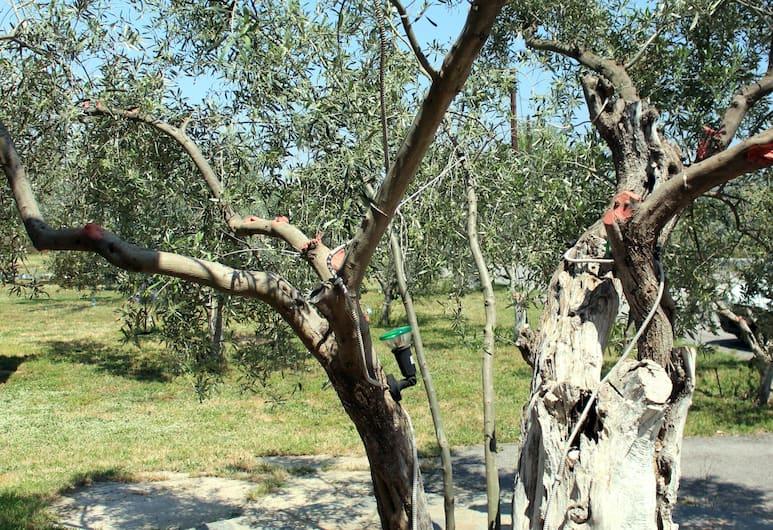 كتيما أناستازيا أبارتمنتس, Nafplio, المنطقة المحيطة بالمنشأة