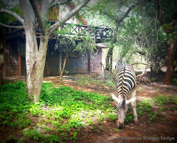 Picture of Phumula Kruger Lodge in Marloth Park