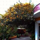 Vienvietis kambarys - Vaizdas į sodą