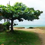 Standard Room - Beach/Ocean View