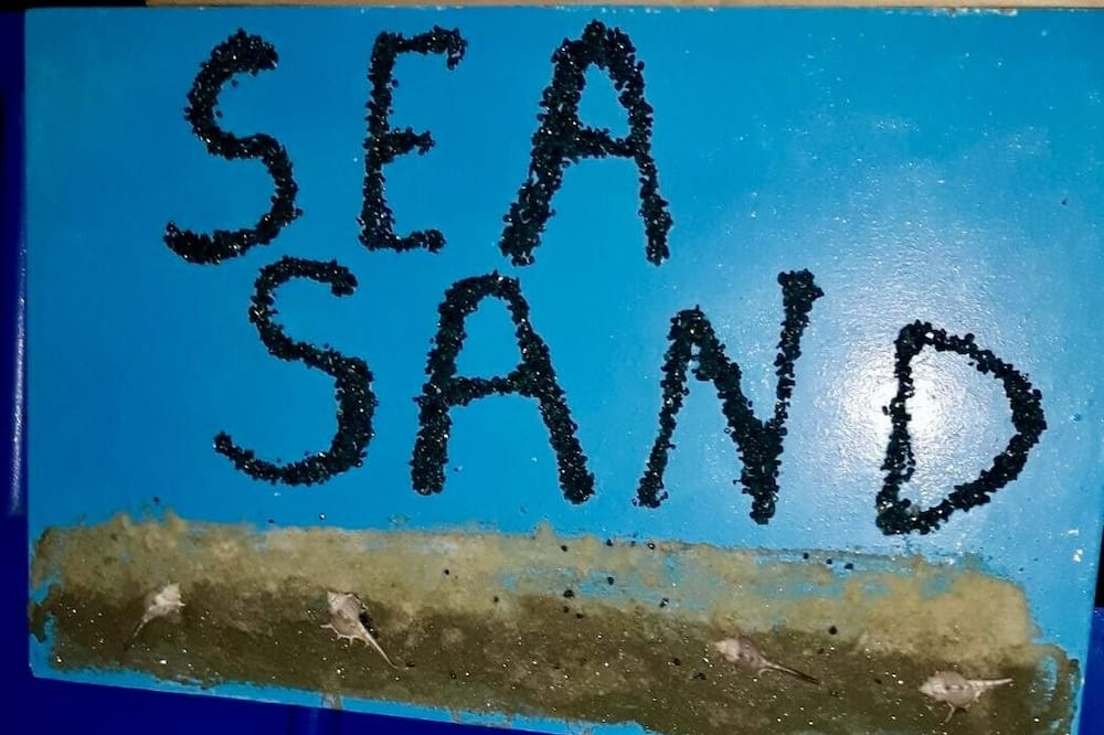 Sea Sand Airport Apartament
