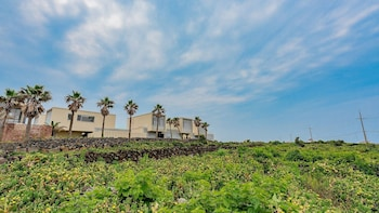 Picture of Namib Pool Villa Jeju in Jeju City