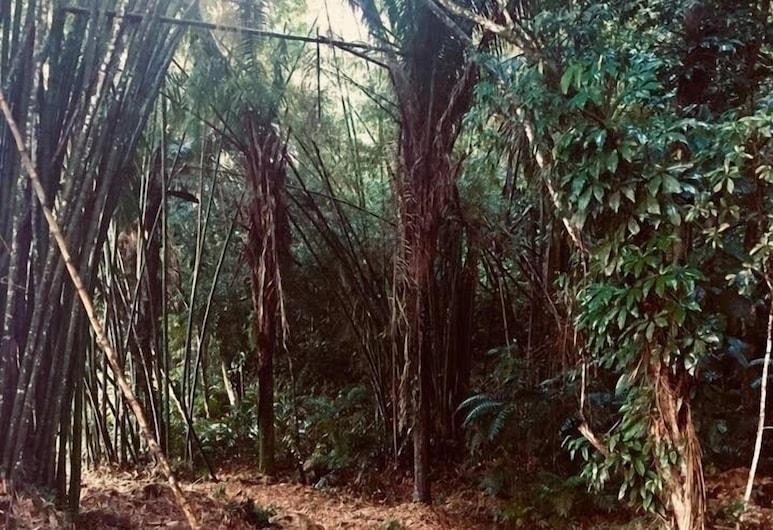Orchard House, Belmopán, Ecotours
