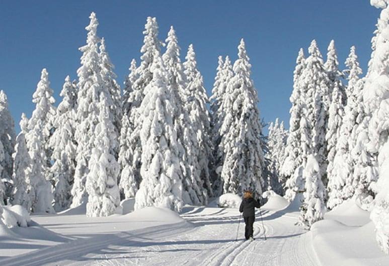 GarniHotel -  Arberblick, Lohberg, Caminatas con raquetas de nieve