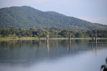 Picture of Lake Bliss in Dambulla