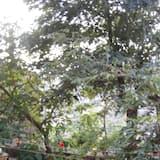Dobbeltrom - Terrasse/veranda
