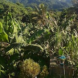 Honeymoon Room - Mountain View
