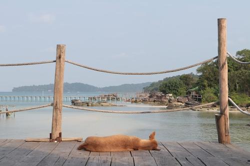 高龍撒冷瘋狂猴子酒店/