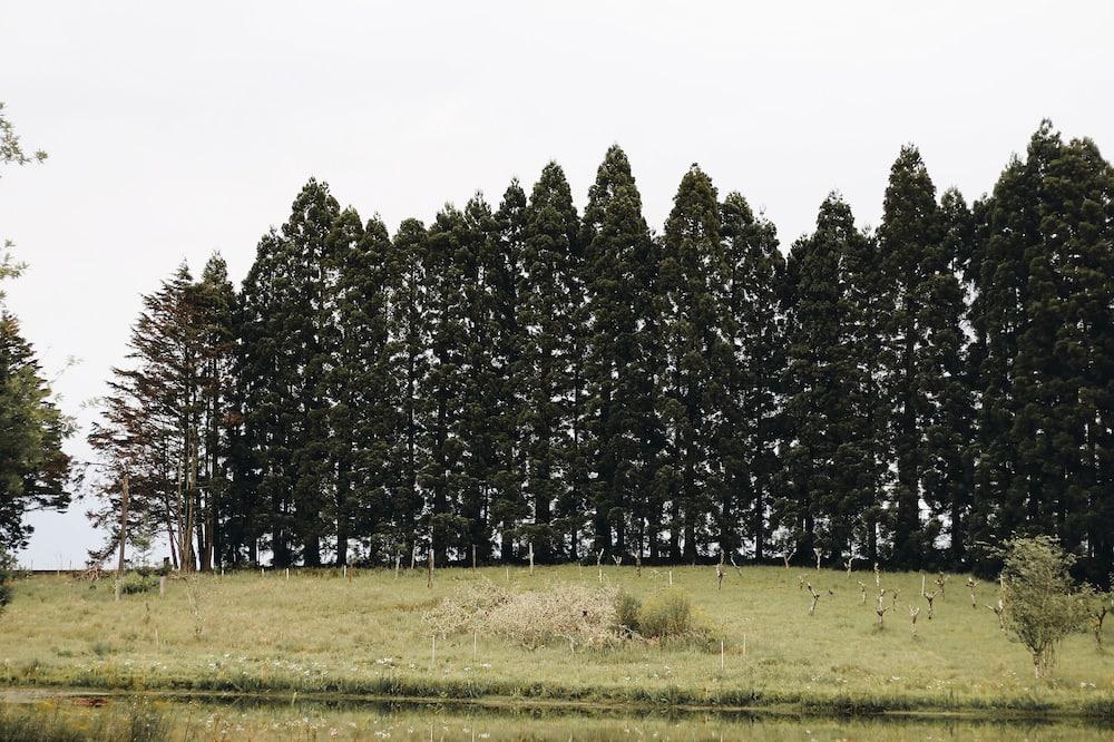 Superior-mökki - Järvinäköala