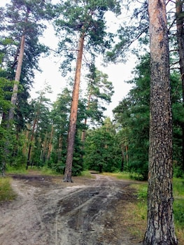 Picture of Guest house Kiev forest in Kyiv
