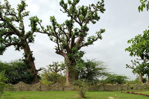 Djandji