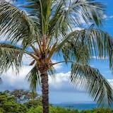 Διαμέρισμα (Condo), 1 Υπνοδωμάτιο - Παραλία