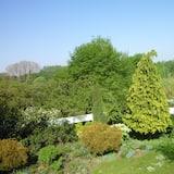 シングルルーム ダブルベッド 1 台 ガーデンビュー - ガーデン ビュー