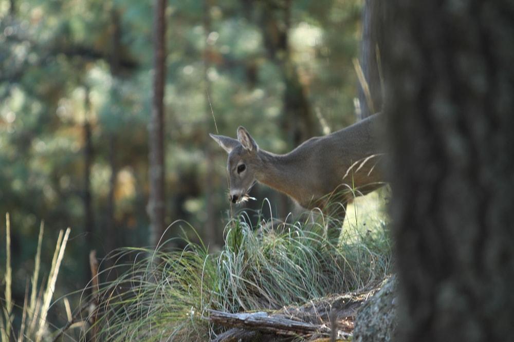 Promatranje divljih životinja