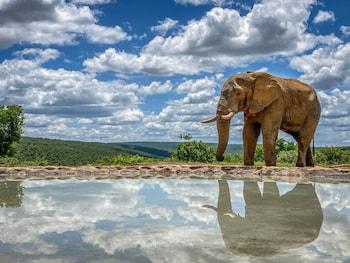 Picture of Laluka Safari Lodge in Vaalwater