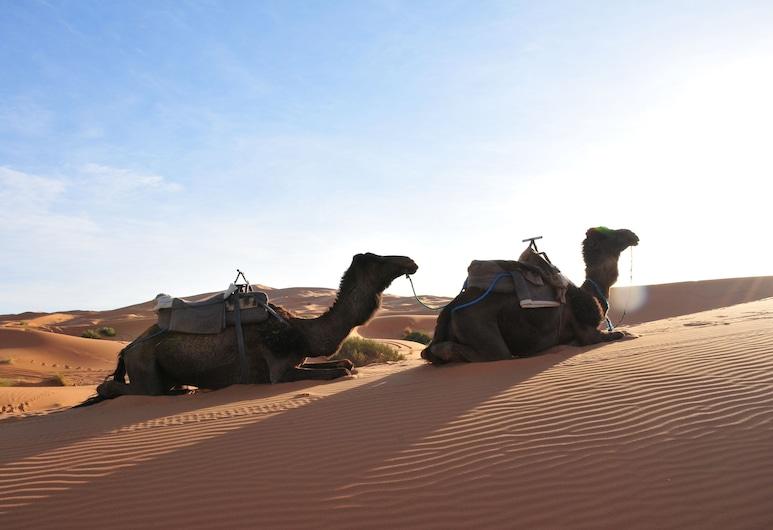 Sahara Luxury Camps, Taouz, Exterior