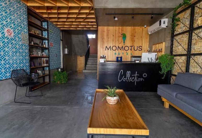 Collection O Momotus, Tuxtla Gutiérrez