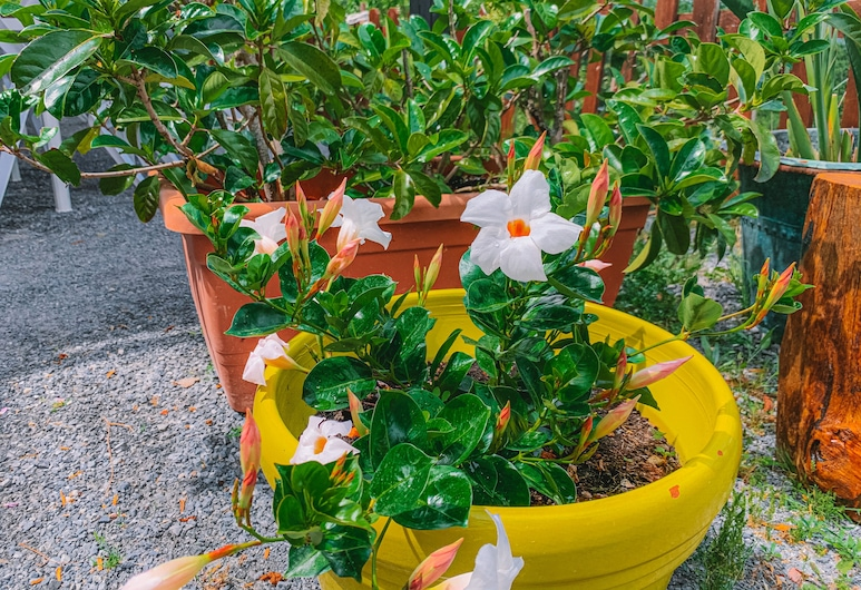 Agriturismo Terrerosse di Massadita, Aieta, สวน