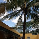 Θέα στην αυλή