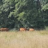 Ferienwohnung auf dem Bauernhof mit Ihrem Pferd