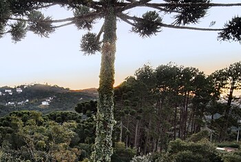 Picture of Recanto das Araucarias in Campos do Jordao