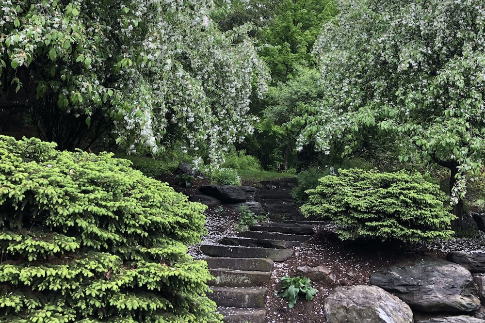 Fiddlehead - Vista al jardín