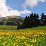วิวภูเขา